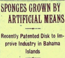 Bahamian Invention Patented To Grow Artificial Sponges 1927